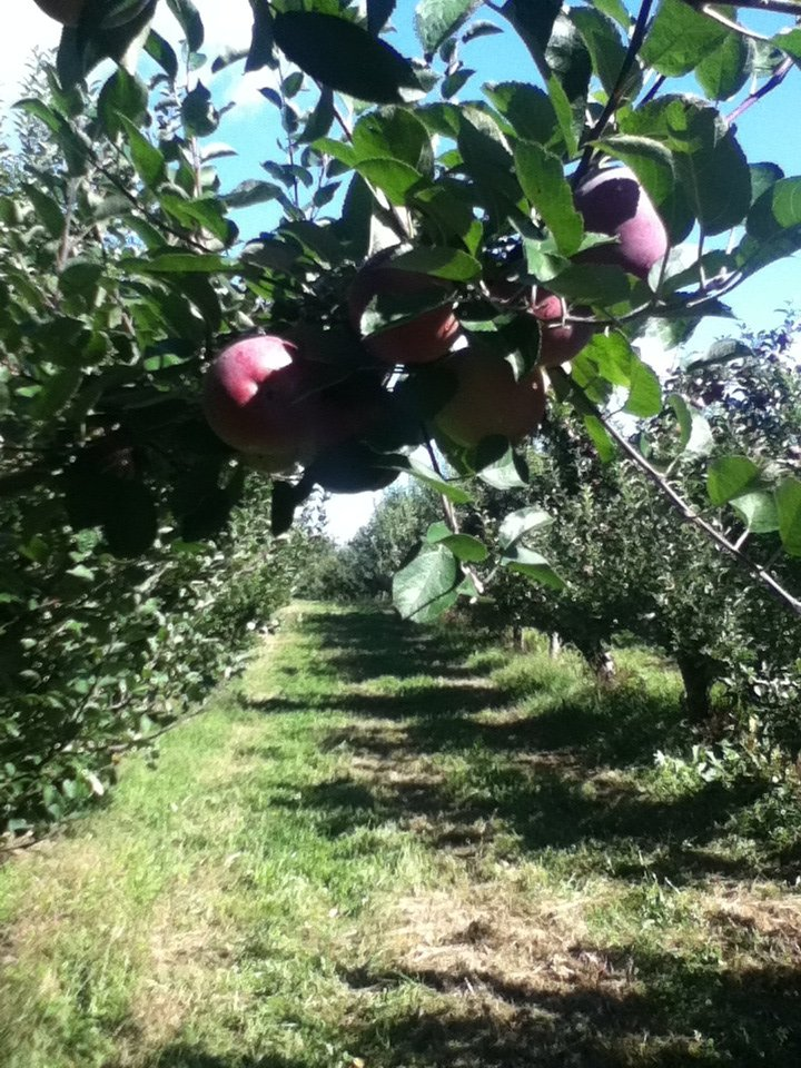 Hudson Valley Rose Hill Farm Pick Your Own Apples