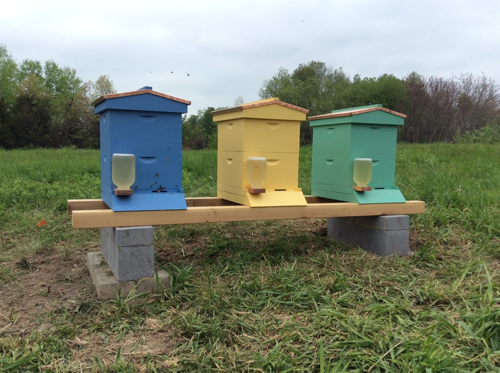 Fully assemble hives, Rose Hill Farm apiary