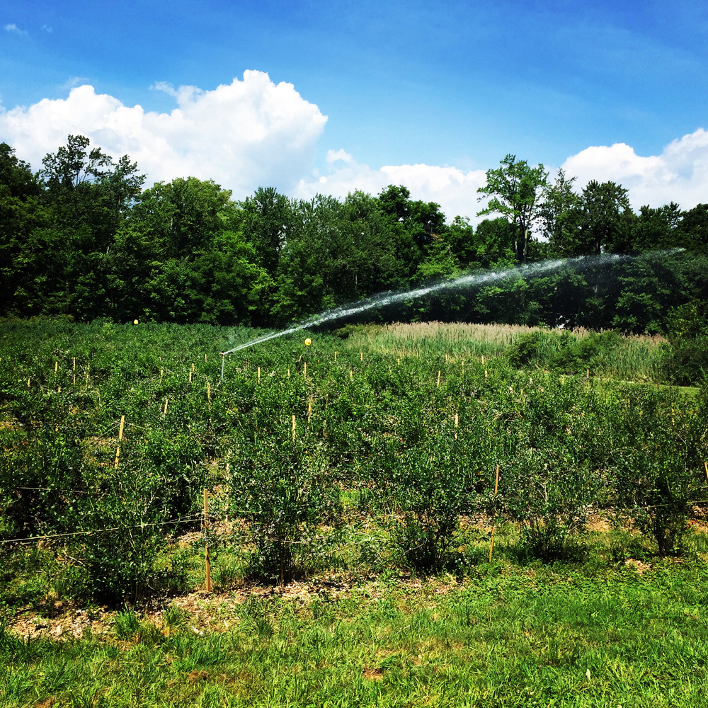 Rose Hill Farm Irrigation