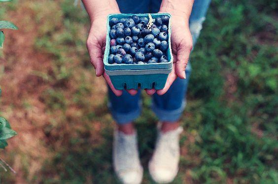 Rose Hill Farm Hudson Valley Blueberry Picking