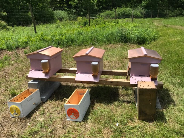 "Feeding our new hives with ""bee tea"""