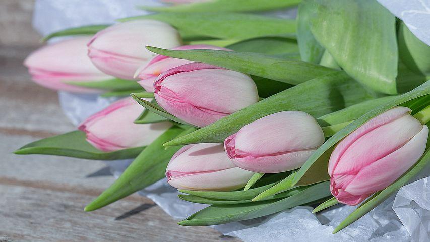 flower-3233461__480.jpg