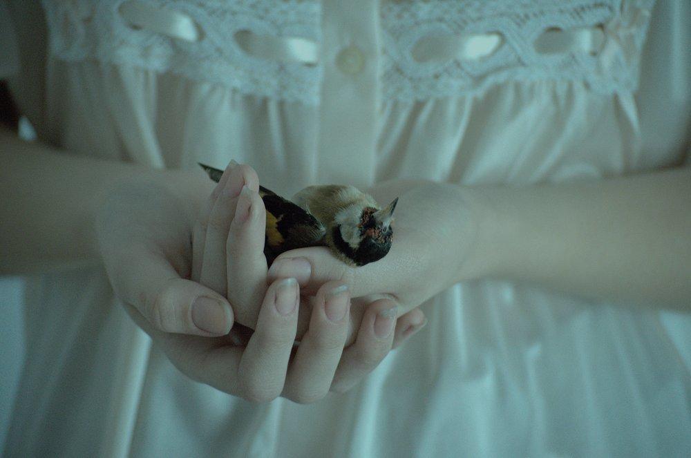 Sleeping birds 2.jpg