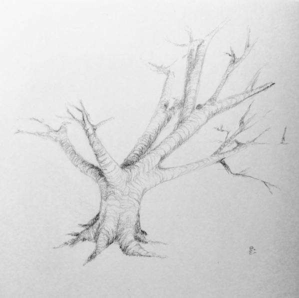 27. Tree