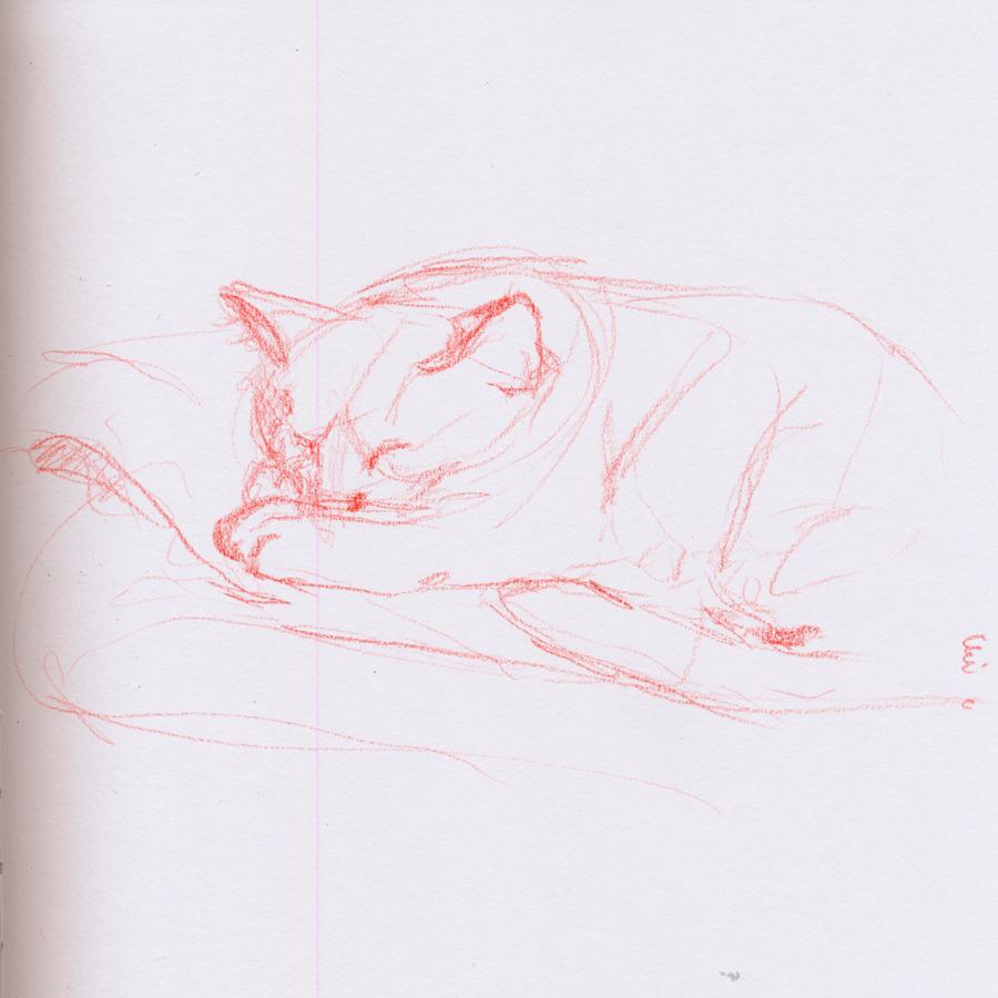 28. Catnaps