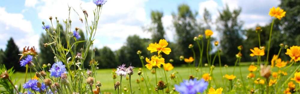 sv-testimonials-3-flowers.jpg