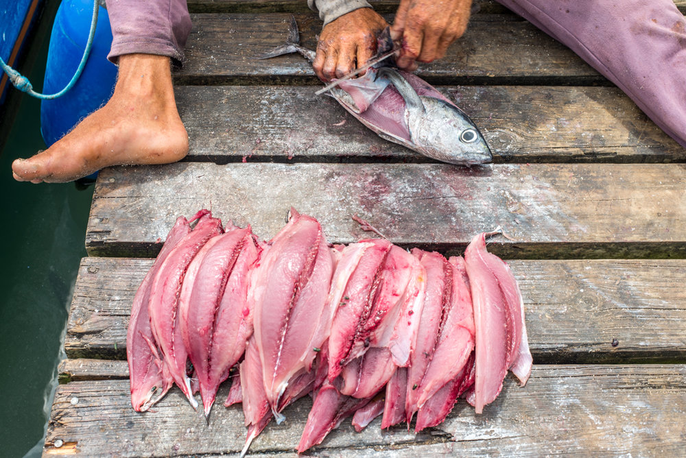 I introduced myself as he was filleting his catch—20 small tunas, for which he receives $4 each. The restaurants he sells to easily make %100 profit each time they sell a fillet. This day was a good day. 20 tunas is above average. Unbeknownst to Sorro or myself, the day would only get better.