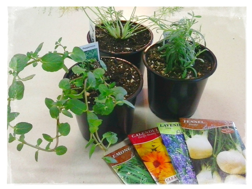 plants.seeds.jpg