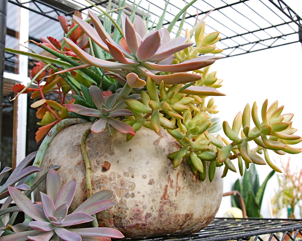 Succulent arrangement in gourd container