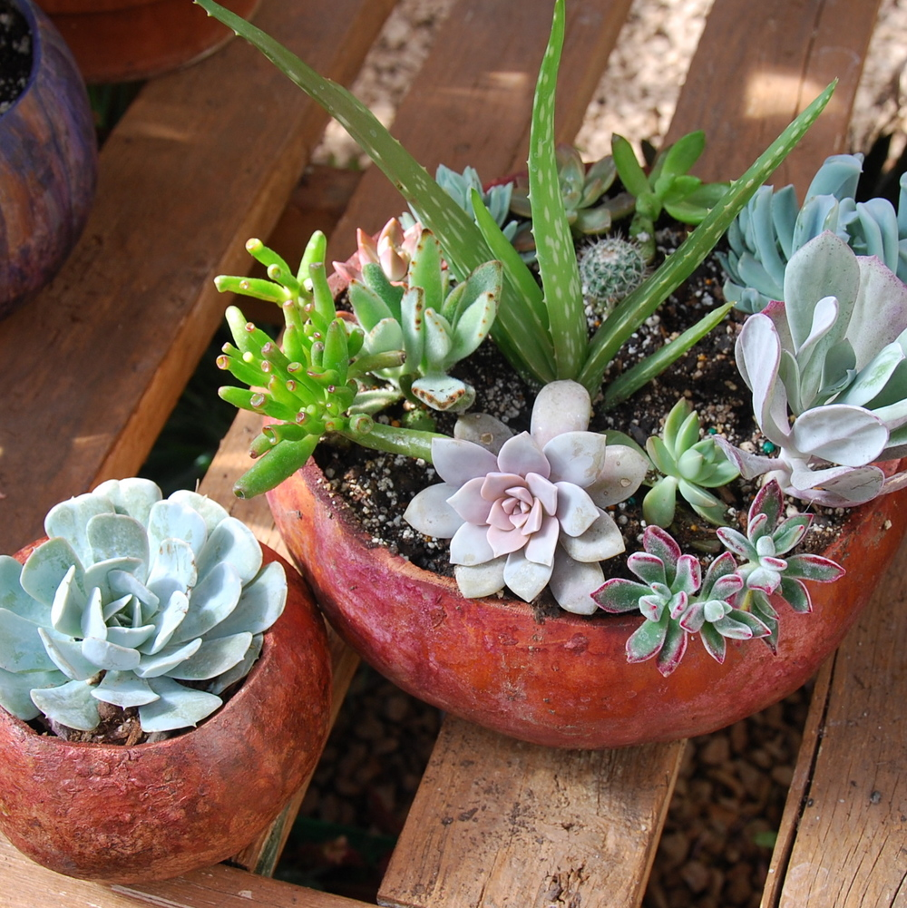 Succulent varieties in gourd containers