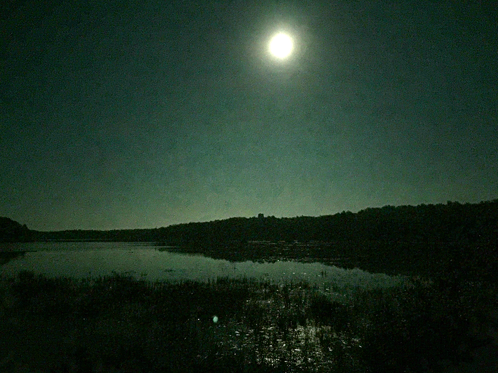 A full moon reflects in the grass on the lake.