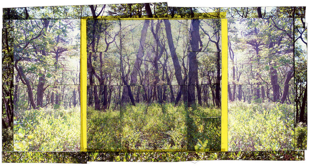"CATOCTIN SP, 5   • 30""x 17"" • GICLEE PRINT FROM TRANSPARENCY FILM COMPOSITION"