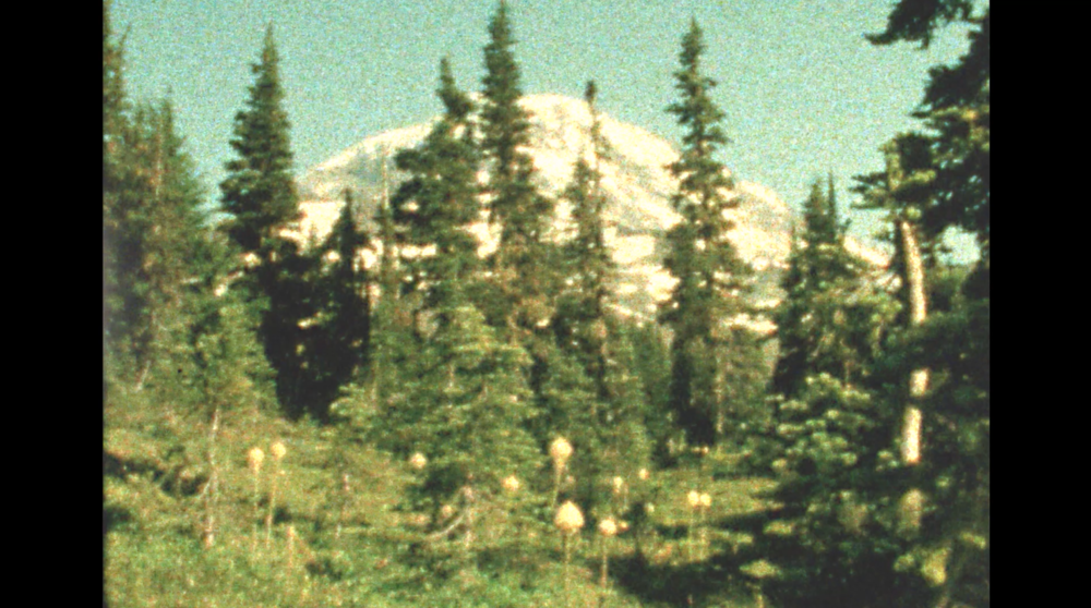 Still image from   Isn't Paradise an Appendix to Botany?  , 2018, super 8 color reversal film.