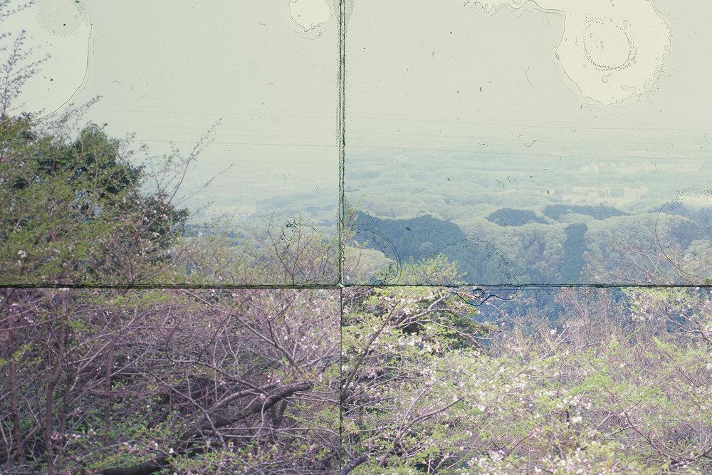 DETAIL,  MT. TAKAO, JAPAN 2