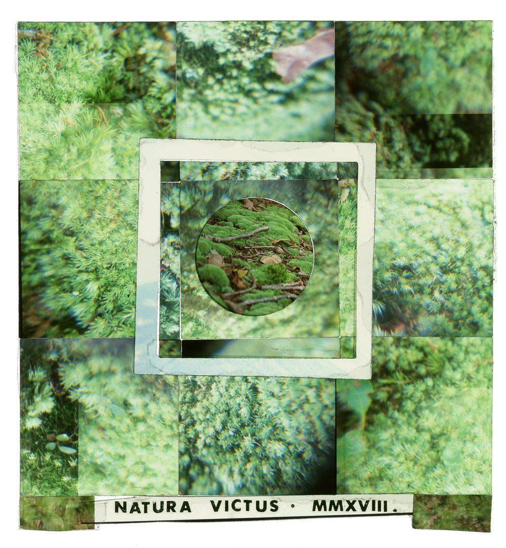 Natura-Victus-12x12_0002_Natura-Victus-3-web.jpg