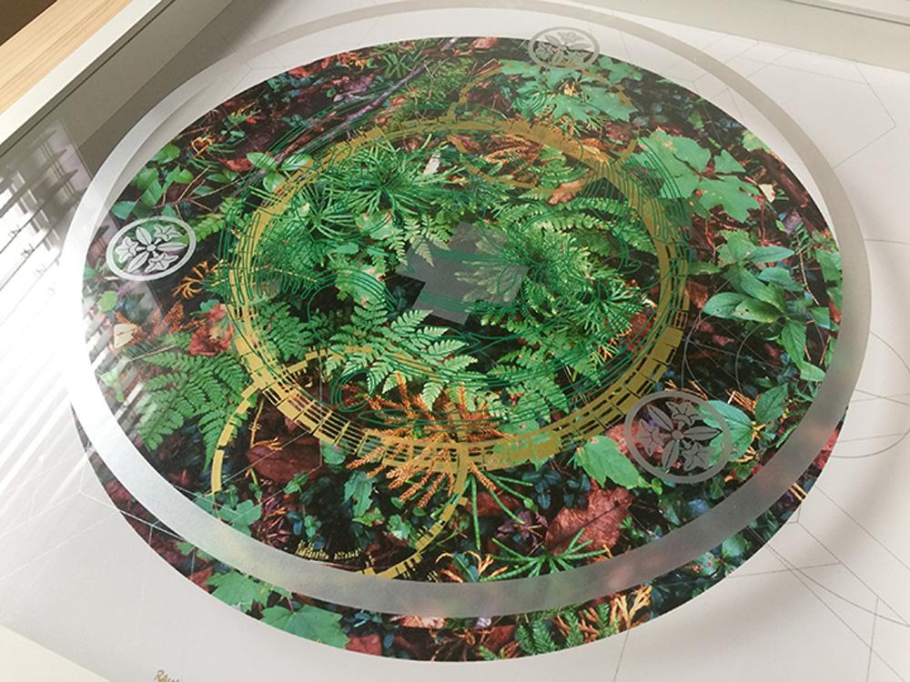 Rainier-Botany-new-8-4.jpg