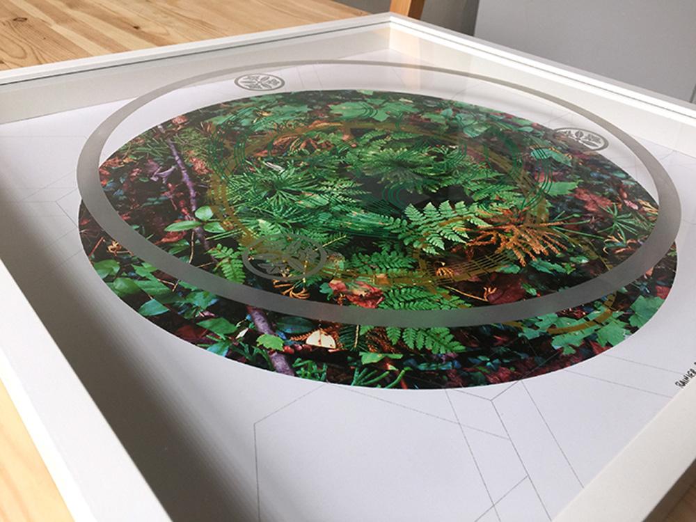 Rainier-Botany-new-8-9.jpg
