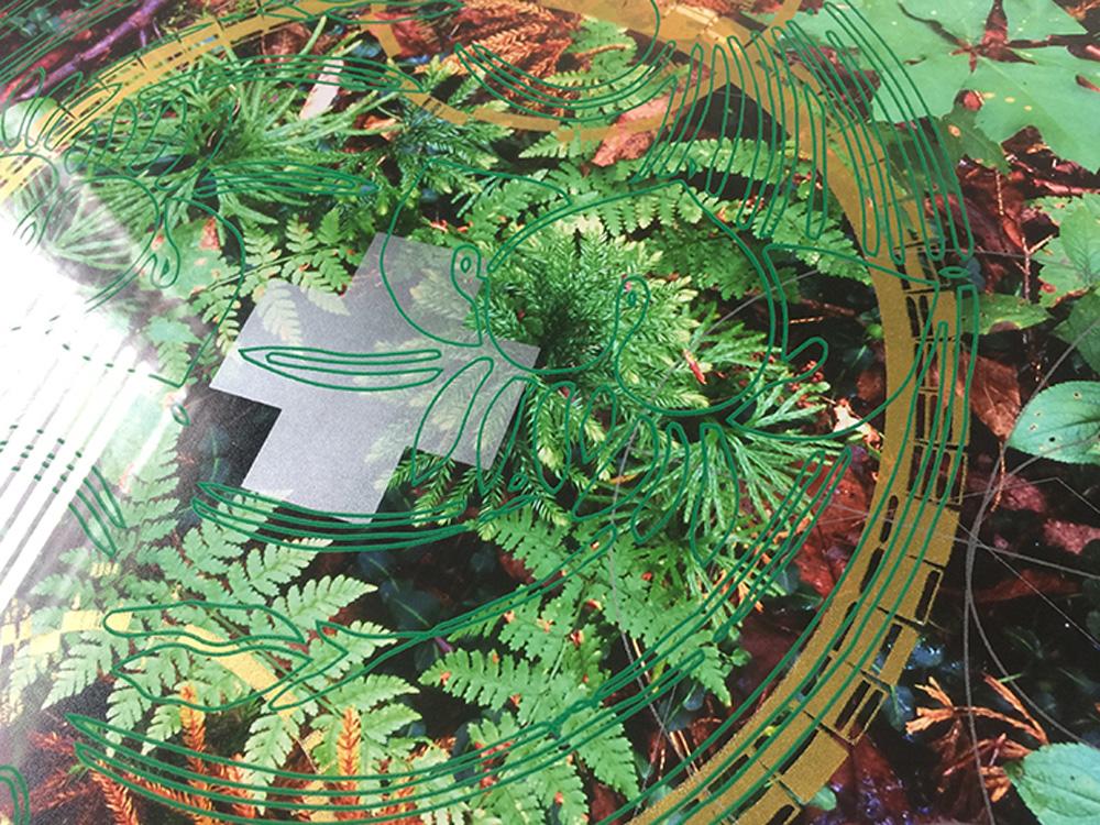 Rainier-Botany-new-8-6.jpg