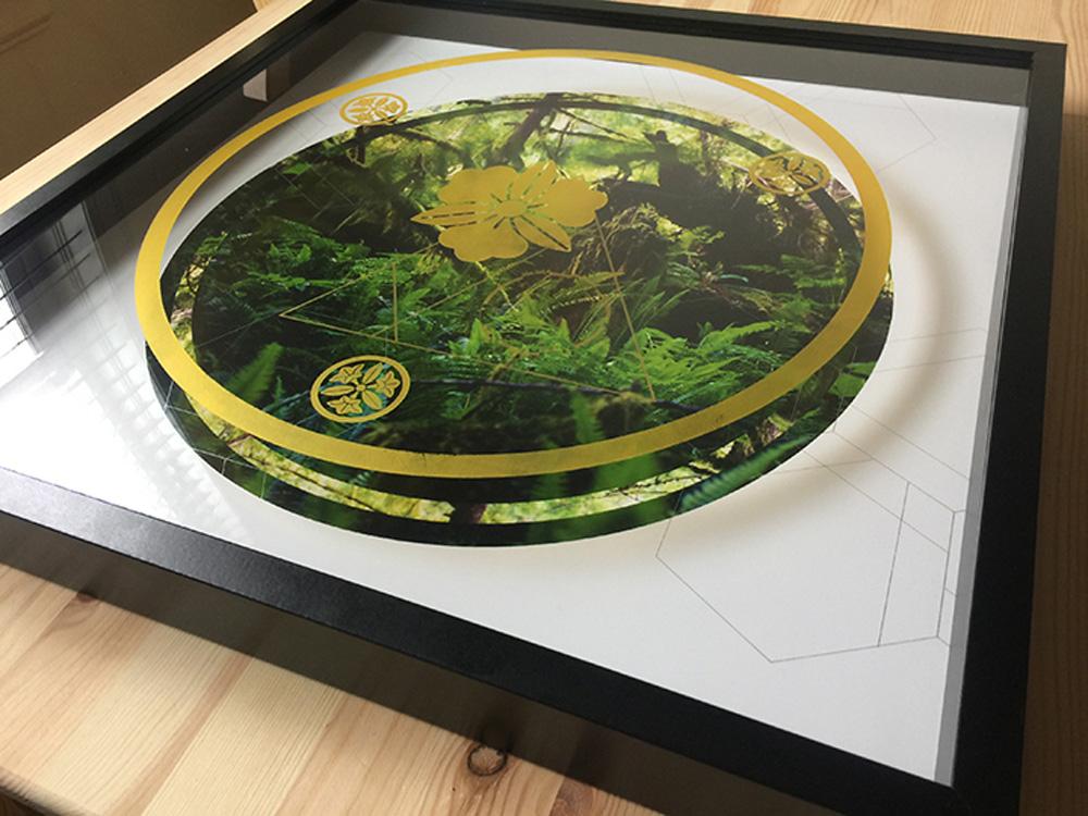 Rainier-Botany-new-11-10.jpg