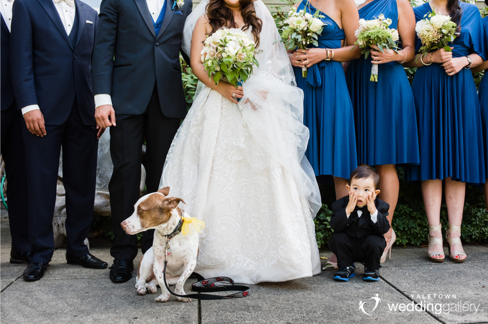 funny-wedding-photo-ring-bearer-dog-ubc-campus-yaletown-wedding-gallery-vancouver-wedding-photographers-vancouver-wedding-photo