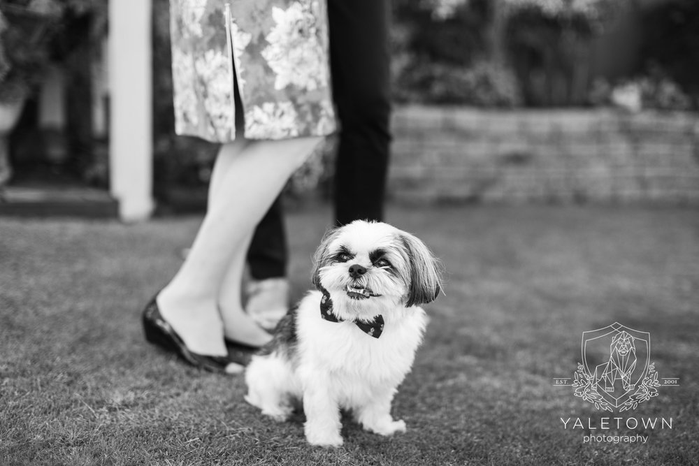 dog-portrait-four-seasons-hotel-vancouver-wedding-yaletown-photography-photo-11.jpg