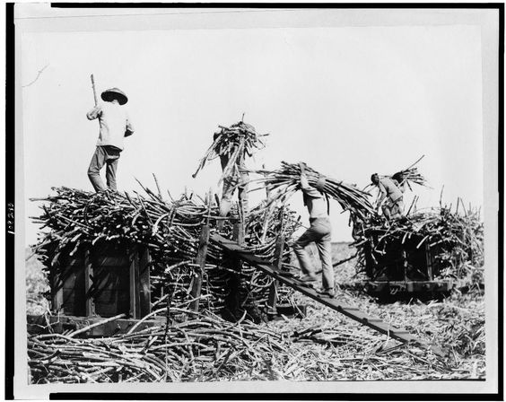 Laborers on a Hawaiian sugar cane plantation;  Source