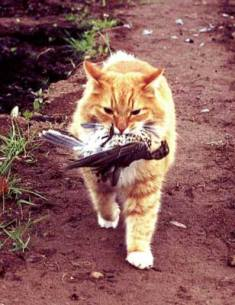 cat hunting bird.jpg