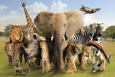 http://www.popartuk.com/photography/wildlife-harmony-ph0452-poster.asp