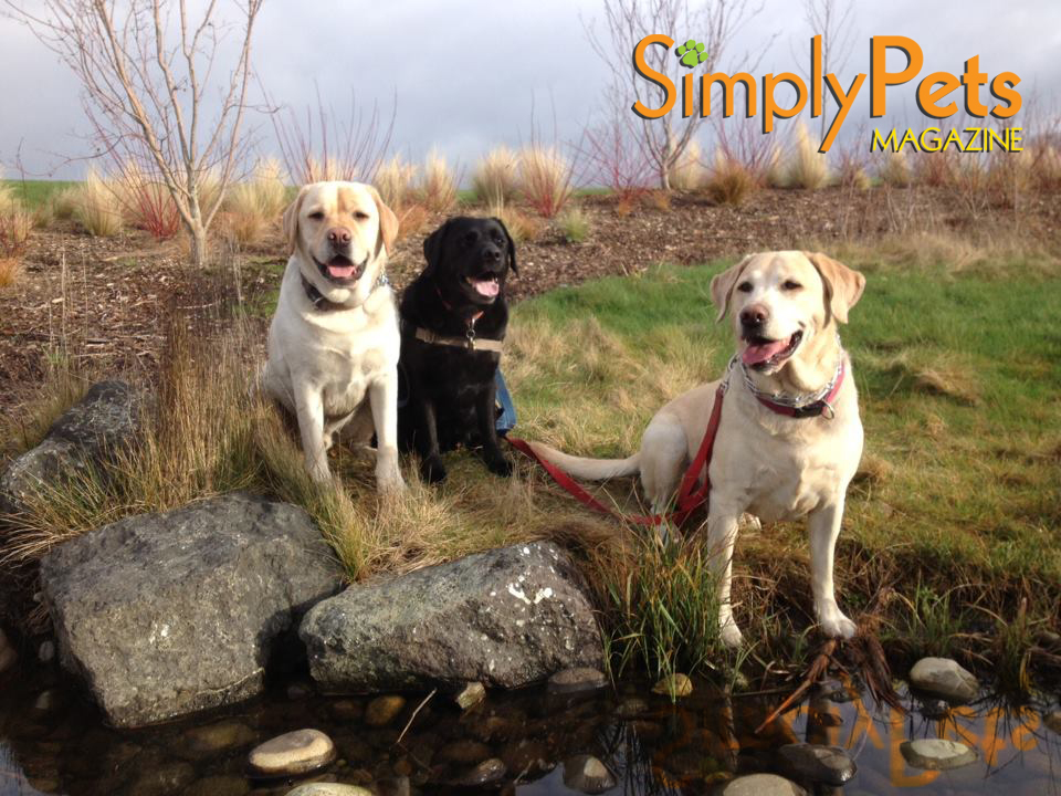 (Inspiration for the Simply Pets Brand left to right) Jaxx, Coopah and Blizzard Putnam