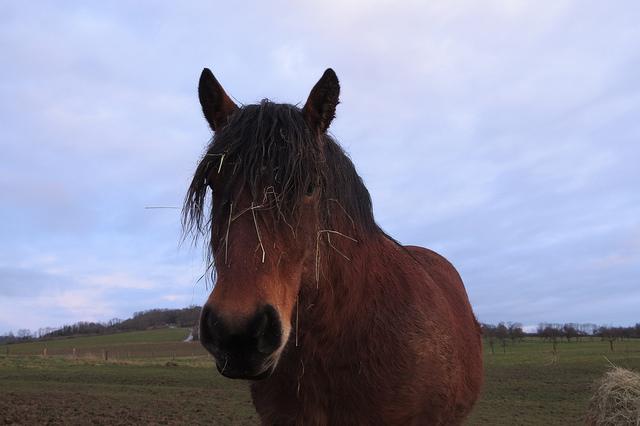 fidber_horse.jpg