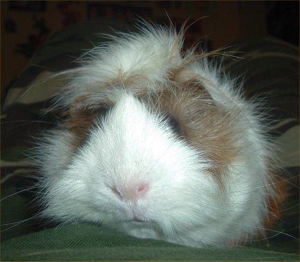 hamster_karen H. nickname.jpg