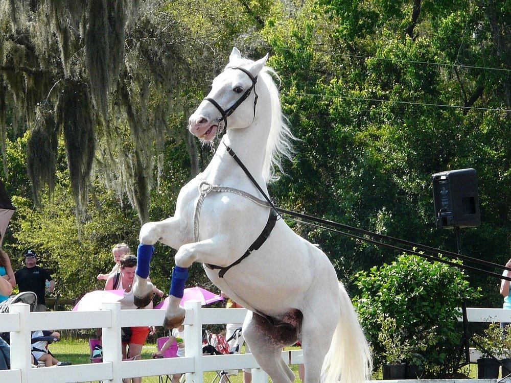 stallion_lippsa horse-652957_1280.jpg
