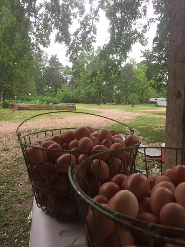 Farm Fresh Chicken and Duck Eggs  Our pasture-raised layers enjoy life in the great outdoors, with lots of grass to eat, and space to roam.