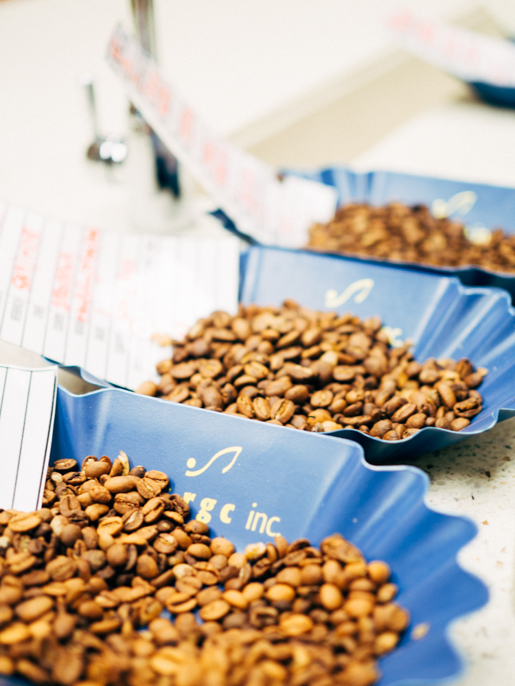 In the cupping lab, a variety of roasted beans are ready to be cupped and tasted.