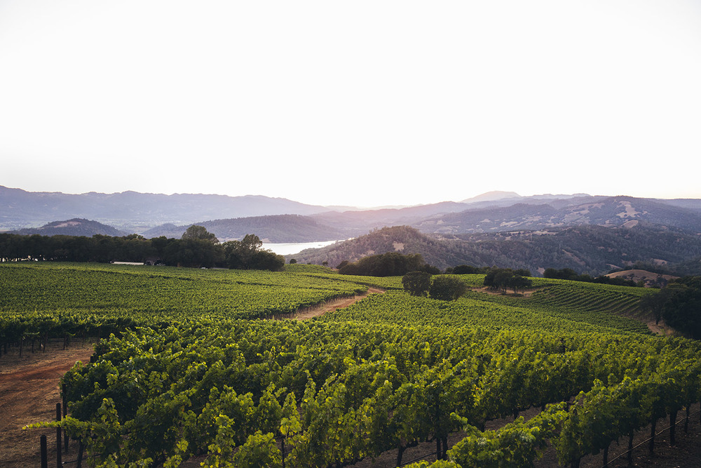 Sunset_Napa-5616_final.jpg