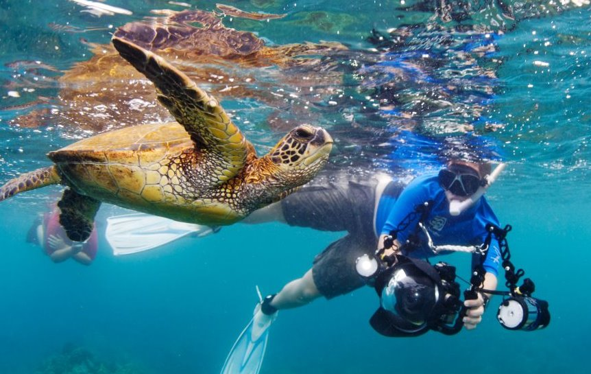 Diver photographing a turtle
