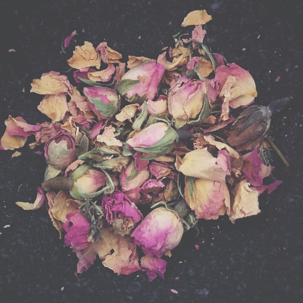 rose buds -