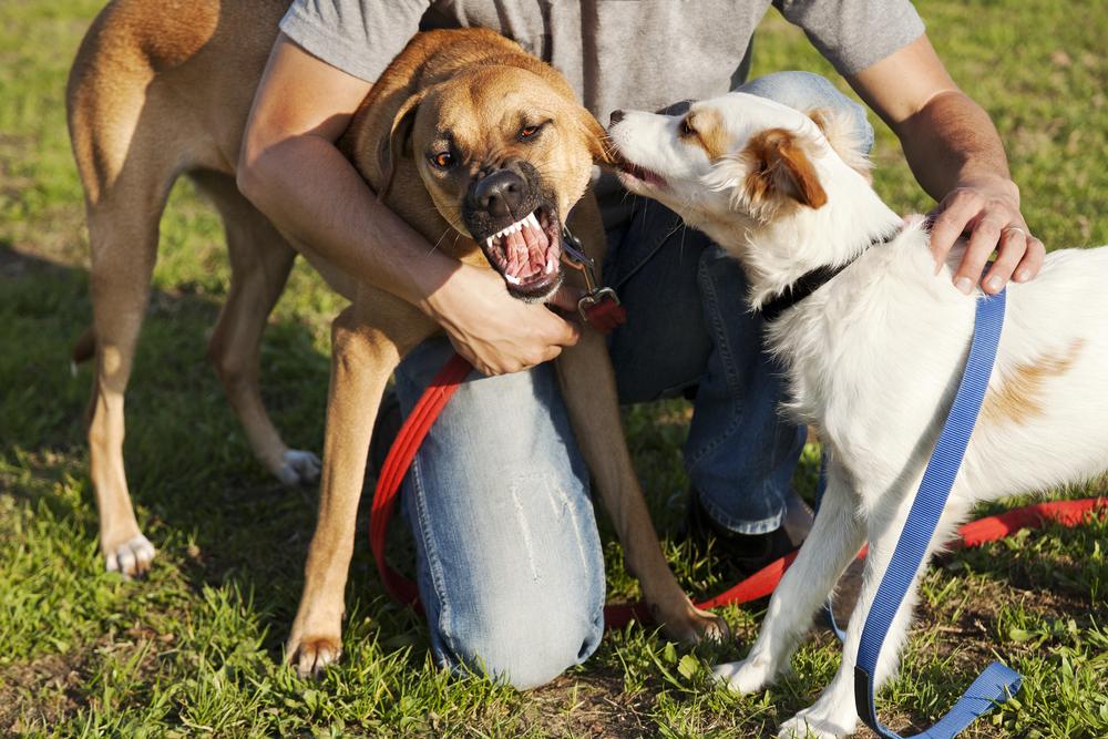 leash-reactive-dogs-leash-pulling-aggressive