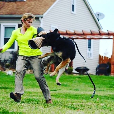 Doing bite work! #southerncanine #dogtraining #dogsofinstagram #southlouisiana