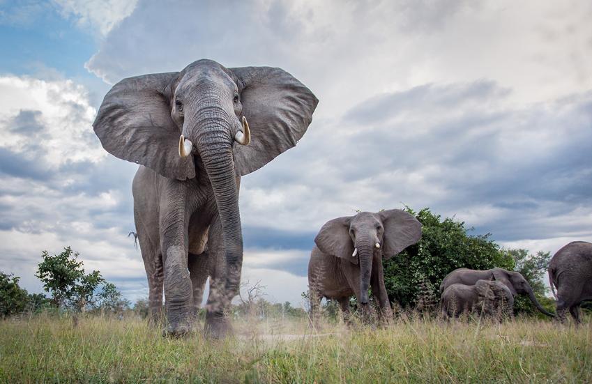 Profile: Wildlife Photographer Will Burrard-Lucas