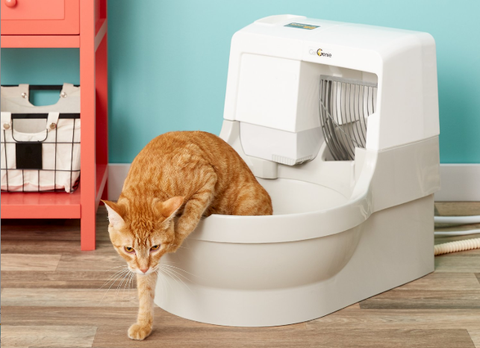 7 of the Best Self-Cleaning Cat Litter Boxes
