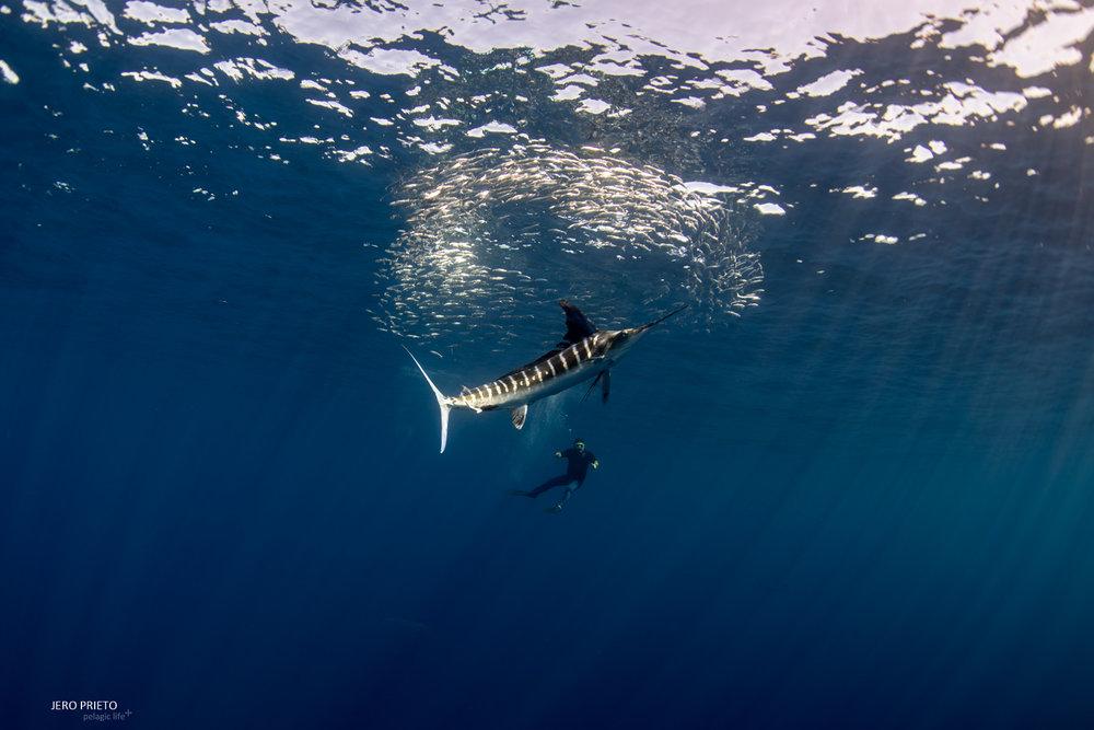 JPB 2016 Noviembre, Magbay Marlin Orca-20 (13).JPG