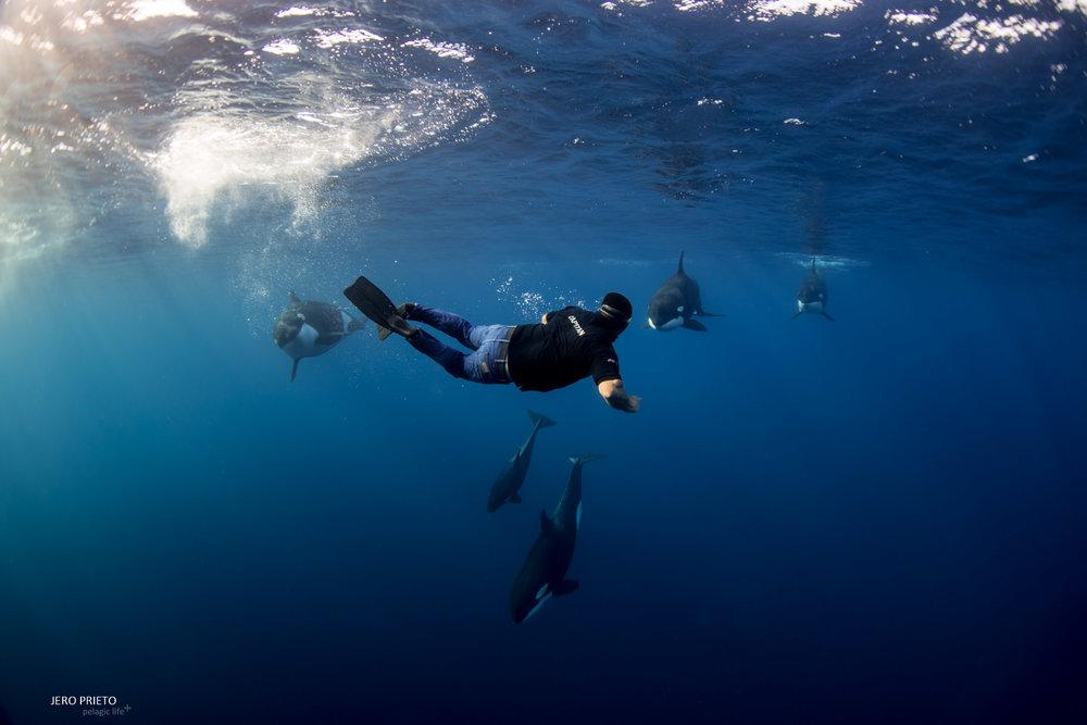 JPB 2016 Noviembre, Magbay Marlin Orca-20 (17).JPG