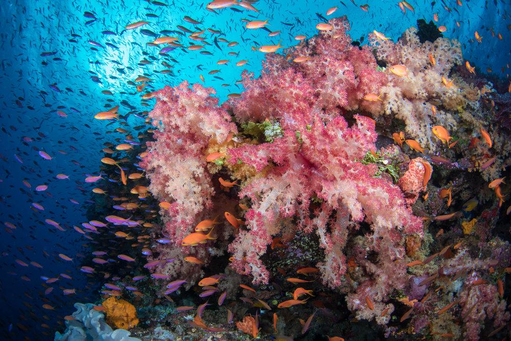 Fiji-Sep16-D500-2261.jpg