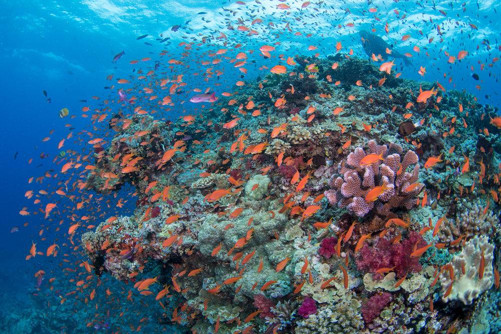Fiji-Sep16-D500-2398.jpg