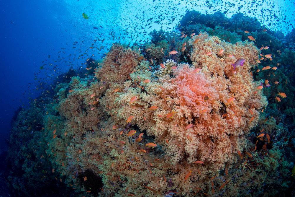 Fiji-Sep16-D500-2963.jpg