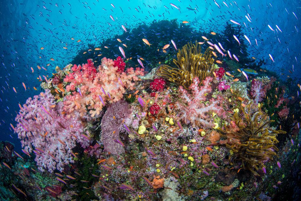 Fiji-Sep16-D500-1340.jpg