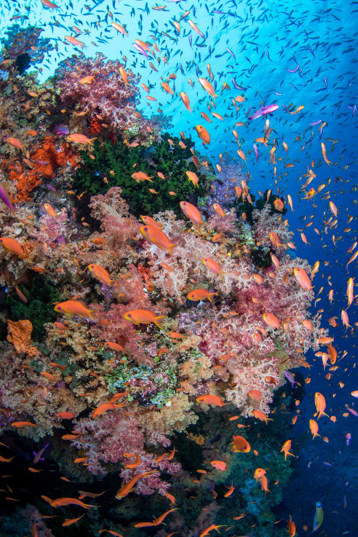 Fiji-Sep16-D500-2324.jpg
