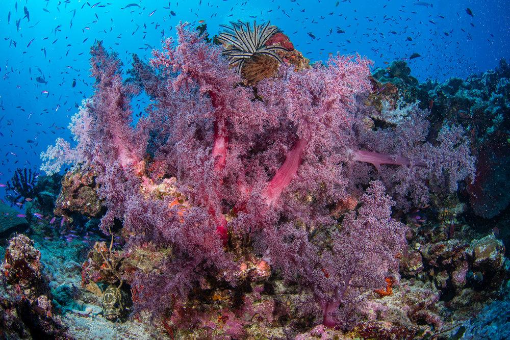 Fiji-Sep16-D500-0884.jpg