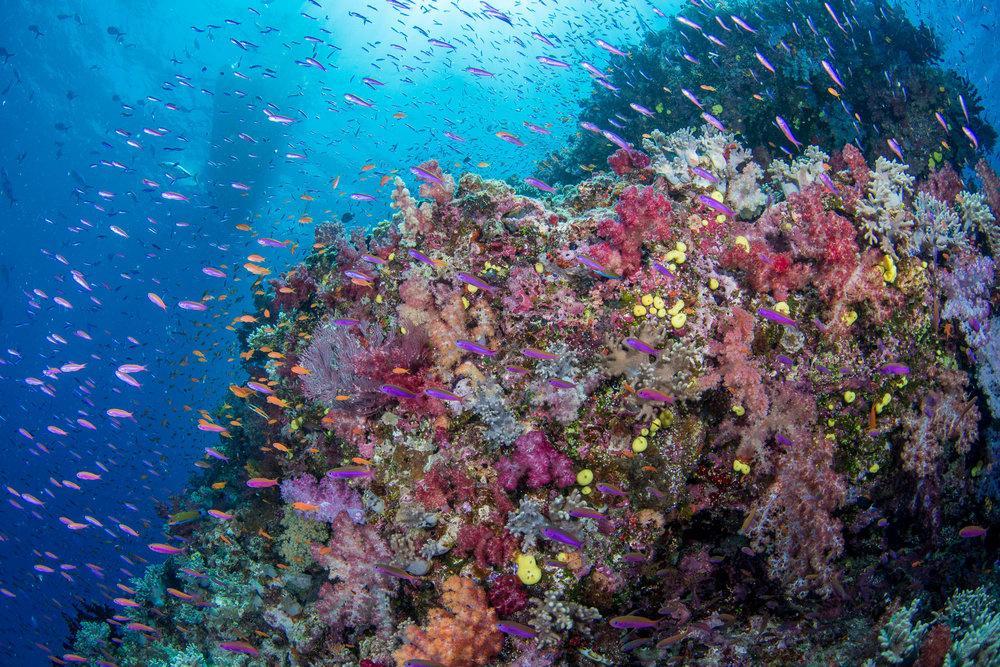 Fiji-Sep16-D500-1048.jpg